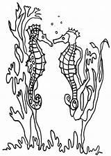 Kelp Seaweed Coloring Template sketch template