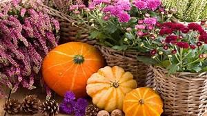 Garten Im Herbst : die sch nsten deko ideen f r ihren garten im herbst b ~ Watch28wear.com Haus und Dekorationen
