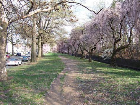 branch brook gardens branch brook park cherryblossomland