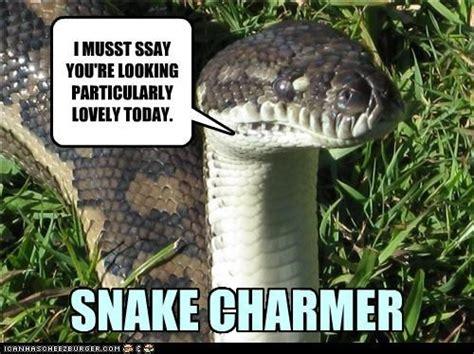 Snake Memes - snake charmer meme slapcaption com snake pinterest memes lol and snakes