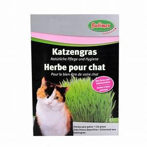 Graine Herbe A Chat : herbe chat bubimex ~ Melissatoandfro.com Idées de Décoration