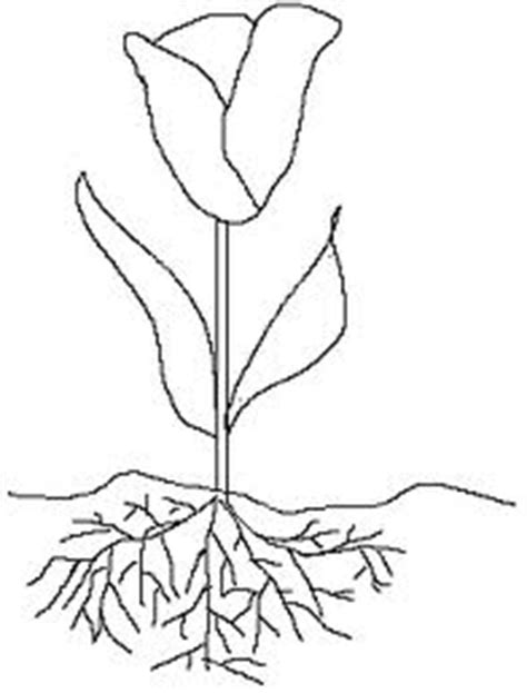 nephron diagram  label sketch coloring page