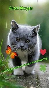 Freche Gute Nacht Bilder : guten morgen lustige bilder kostenlos f r whatsapp ~ Yasmunasinghe.com Haus und Dekorationen