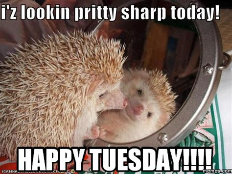 Happy Tuesday Meme - tuesday the speaking paw