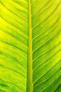 Brush Painting Green Leaf Texture Photograph by Srijira ...