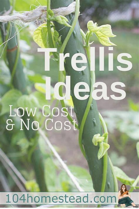 cheap beds low cost no cost garden trellis ideas