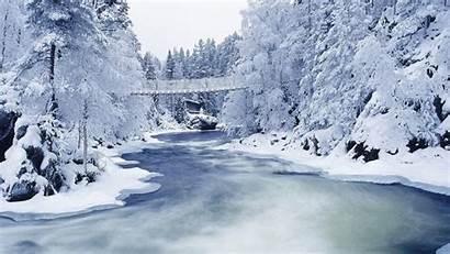 Winter Forest Wallpapers Desktop Background Backgrounds Snow