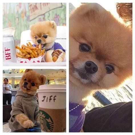 images  jiffpom  pinterest double chin