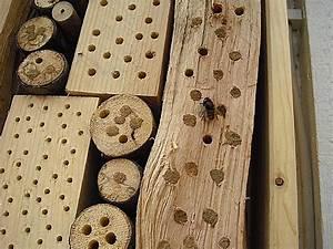 Tiere Im Insektenhotel : insektenhotel kaufen hier sind die top insektenhotels ~ Whattoseeinmadrid.com Haus und Dekorationen