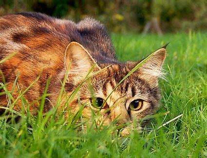 Keep Cats In Backyard by 10 Ways To Keep Cats Out Of Your Yard