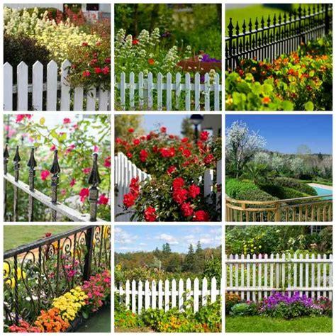 arbuste de decoration exterieure merveilleux arbuste de decoration exterieure 8 des arbustes originaux pour mon jardin atlub
