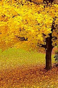 Autumn Tree iPhone Wallpaper HD