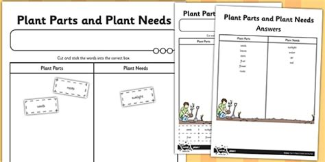 plant parts and plant needs cut and stick worksheet worksheet cut