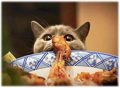 recette maison pour chat mystere naturel