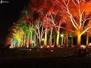 spot eclairage arbre exterieur dootdadoocom idees de With eclairage exterieur pour arbre 4 decoration olivier exterieur