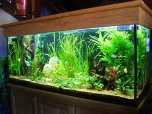photo plante aquarium eau douce