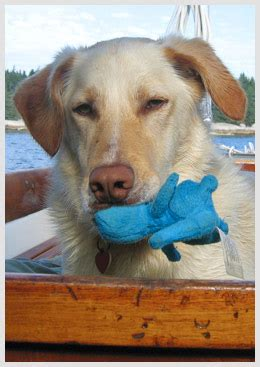 Boat Yard Dog Trials In Rockland by Boatyard Dog Halley 96 Maine Boats Homes Harbors