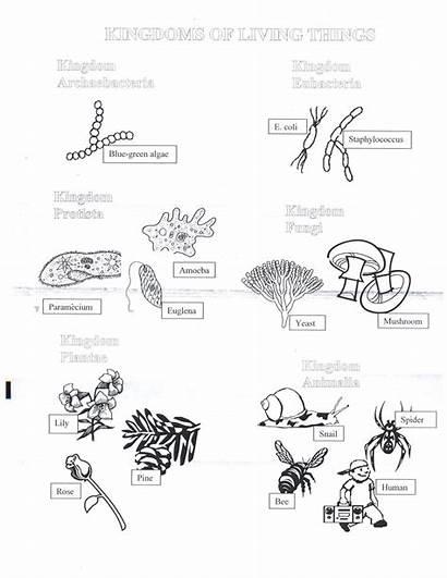 Kingdoms Worksheet Coloring Six Answers Protist Biology