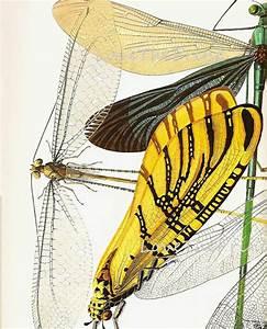 88 Best Dragonfly Illustrations Images On Pinterest