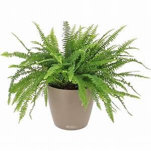 Plantes à Suspendre : livraison foug re d polluante la plante bac lechuza ~ Premium-room.com Idées de Décoration