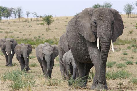 Great Migration African Safari