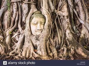 Wurzeln Im Kopf Berechnen : banyan tree stockfotos banyan tree bilder alamy ~ Themetempest.com Abrechnung