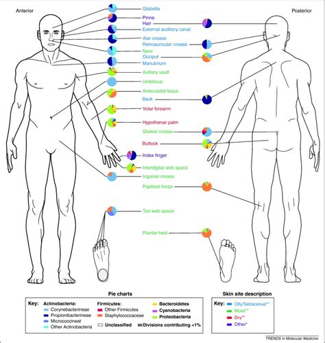 Wound assessment body diagram ccuart Image collections