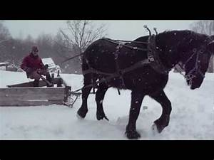 Plowing With Draft Horse And V-plow 2