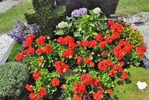 Blumen Im Sommer : grabblumen sommer grabblumen sommer daniel 39 s grab im sommer mit blumen grabpflege ~ Whattoseeinmadrid.com Haus und Dekorationen