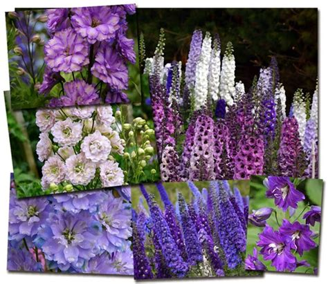 Garden Plants And Flowers Names