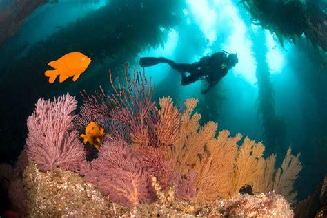 scientist  work ive dived  hundreds  underwater