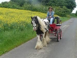 Age Devant Voiture : mon cheval devant notre voiture ~ Medecine-chirurgie-esthetiques.com Avis de Voitures