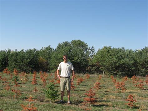 kris kringle trees oh tree iowa radio