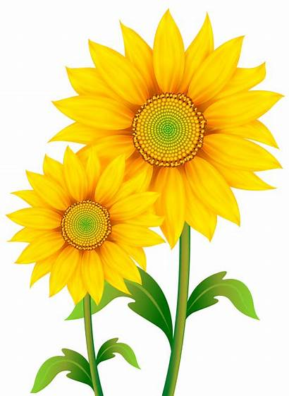Transparent Clipart Sunflowers Flowers Yopriceville Previous