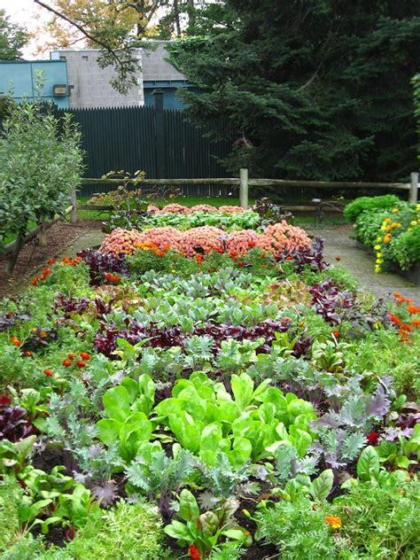 Lawn Or Vegetable Garden? Gardening