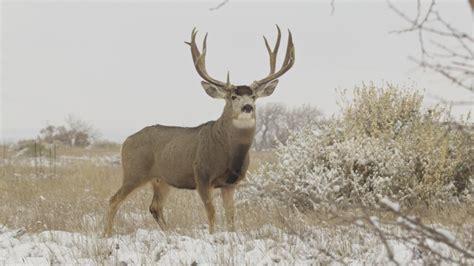 Colorado tries baiting to save deer and elk   goHUNT