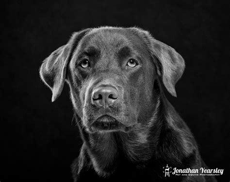 fine art dog photographer cheshire