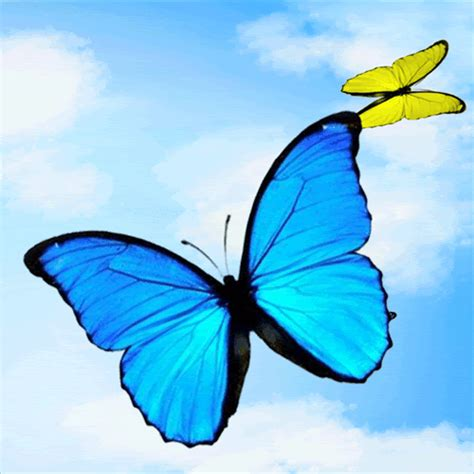 Animated Butterfly Wallpaper Gif - animated butterfly wallpaper wallpapersafari
