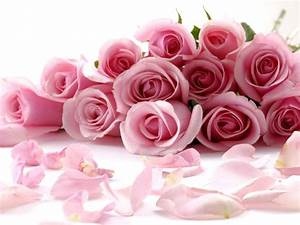 Flowers: Beautiful Flowers Roses