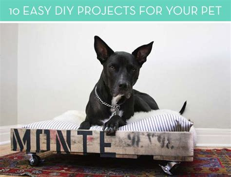 Easy Diy Projects For Your Pets And Furry