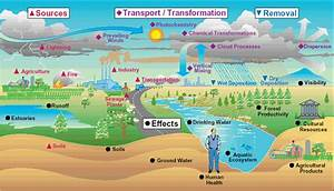 The Effects Of Air Pollutants On Vegetation And The Role Of Vegetation In Reducing Atmospheric