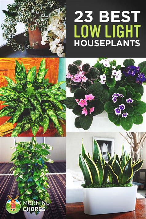 best small indoor plants low light 23 low light houseplants that are easy to maintain even if