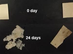 US researchers develop NR-reinforced bioplastics