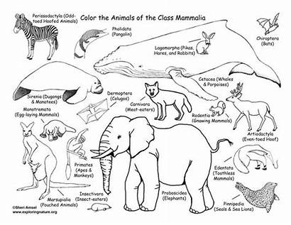 Coloring Mammals Classification Pages Nature Pokemon Colouring