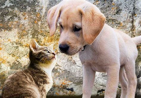 better cats than why dogs reasons pets animals
