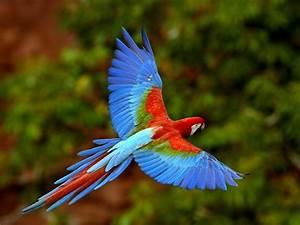 Plants & Animals - Tropical Rainforest Biome