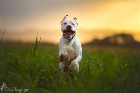 photography nature animals dog wallpapers hd desktop
