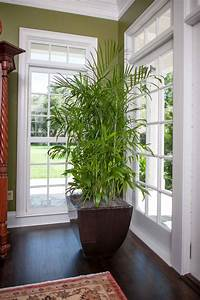 15, Air, Purifying, Plants, You, Need, In, Your, Home