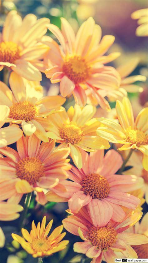 sfondi primavera fiori sfondi fiori hd iphone sfondi