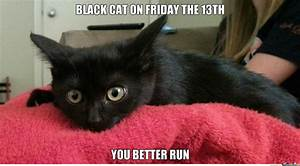 Black Cat (Found On Reddit) ((Captions Are My Own)) by ...